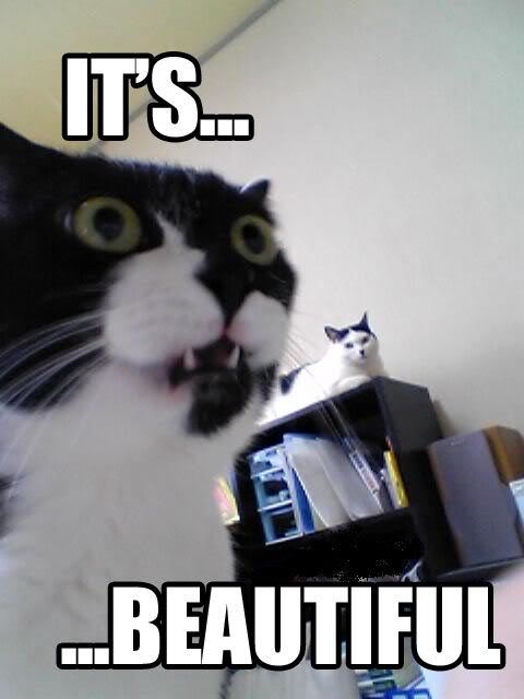 cat-its-beautiful-757604.jpg